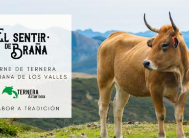 EL SENTIR DE BRAÑA. Ternera Asturiana I.G.P.