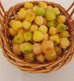 Golden Berry Alea